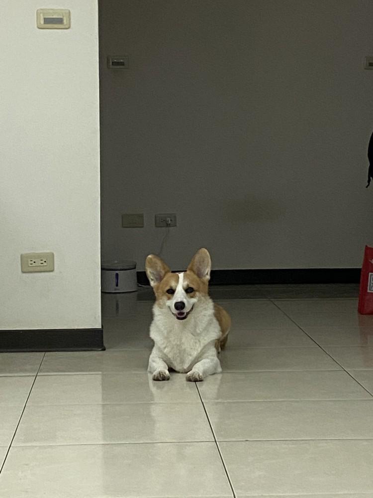 領養狗-吉米