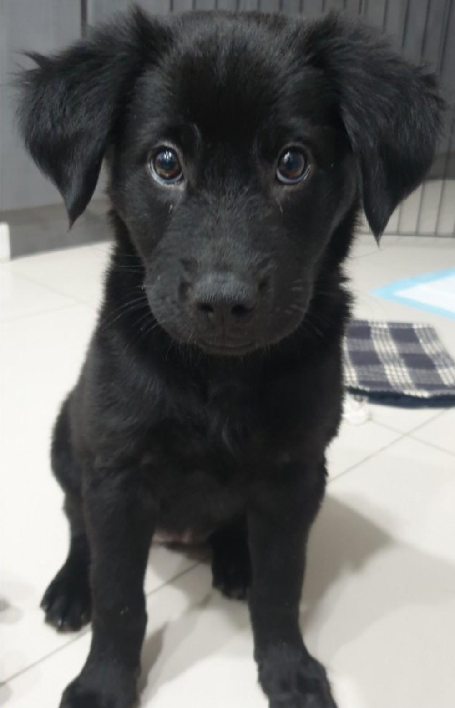 領養狗-珍珠