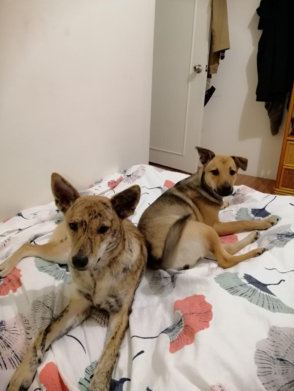 領養狗-美枝、志玲
