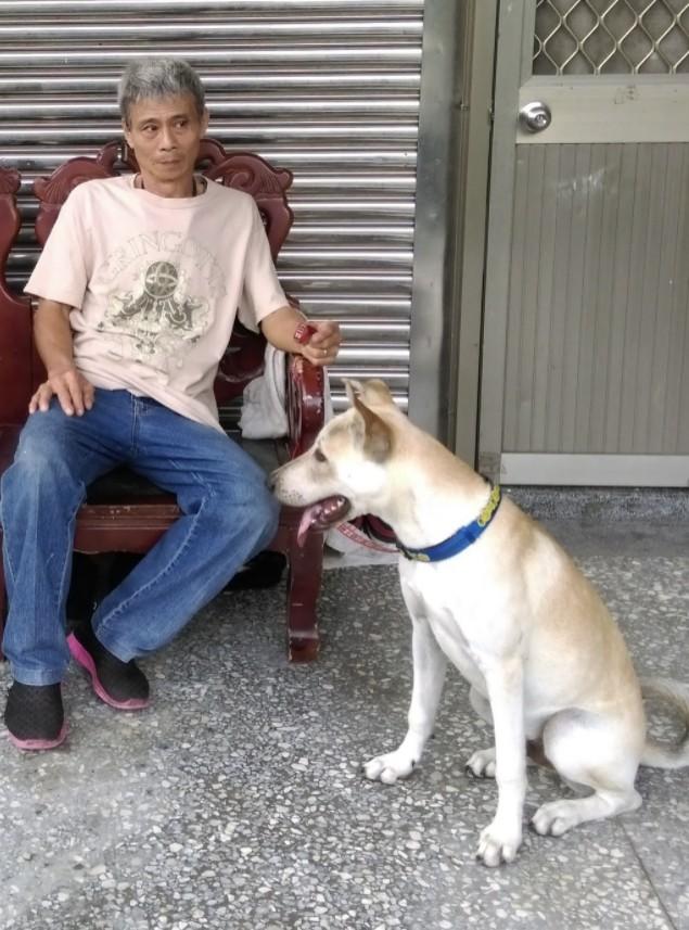 領養狗-平平