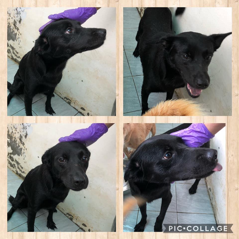 領養狗-小黑