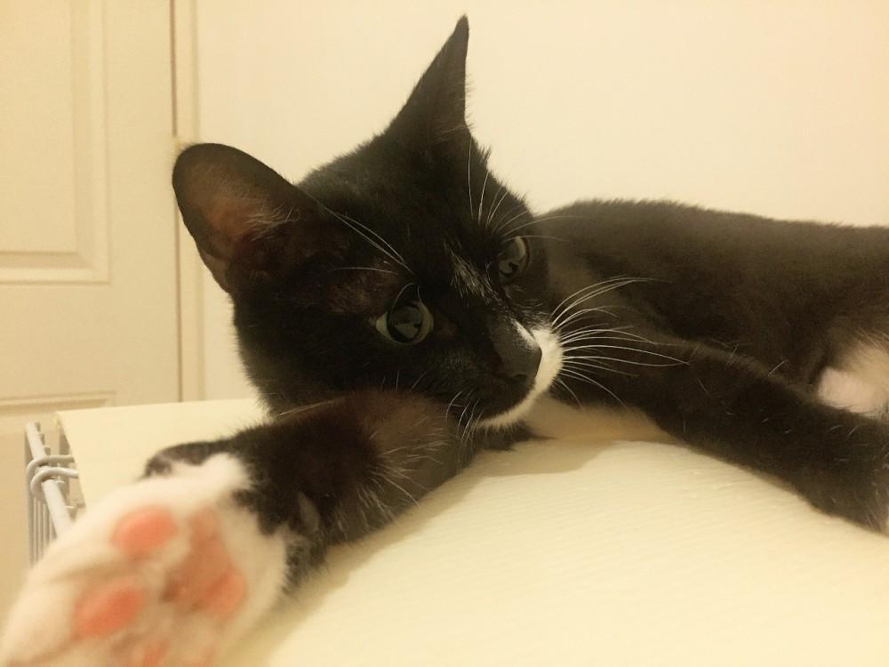 領養貓-黑米