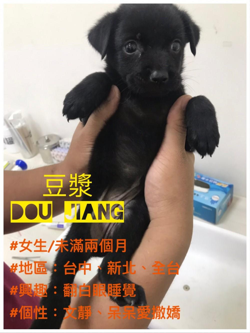 領養狗-豆漿Dou Jiang