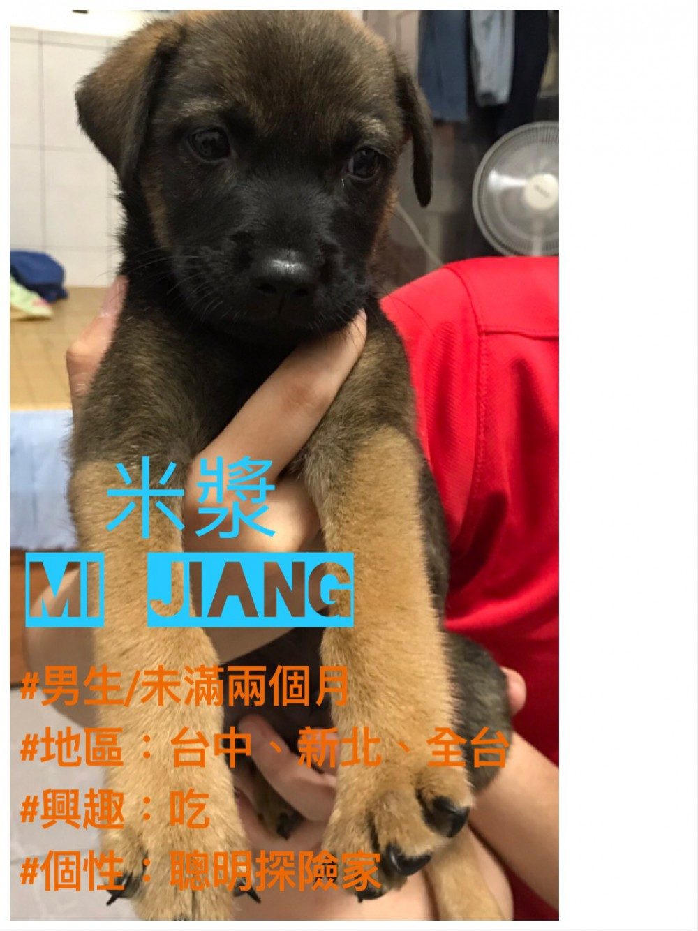 領養狗-米漿Mi Jiang