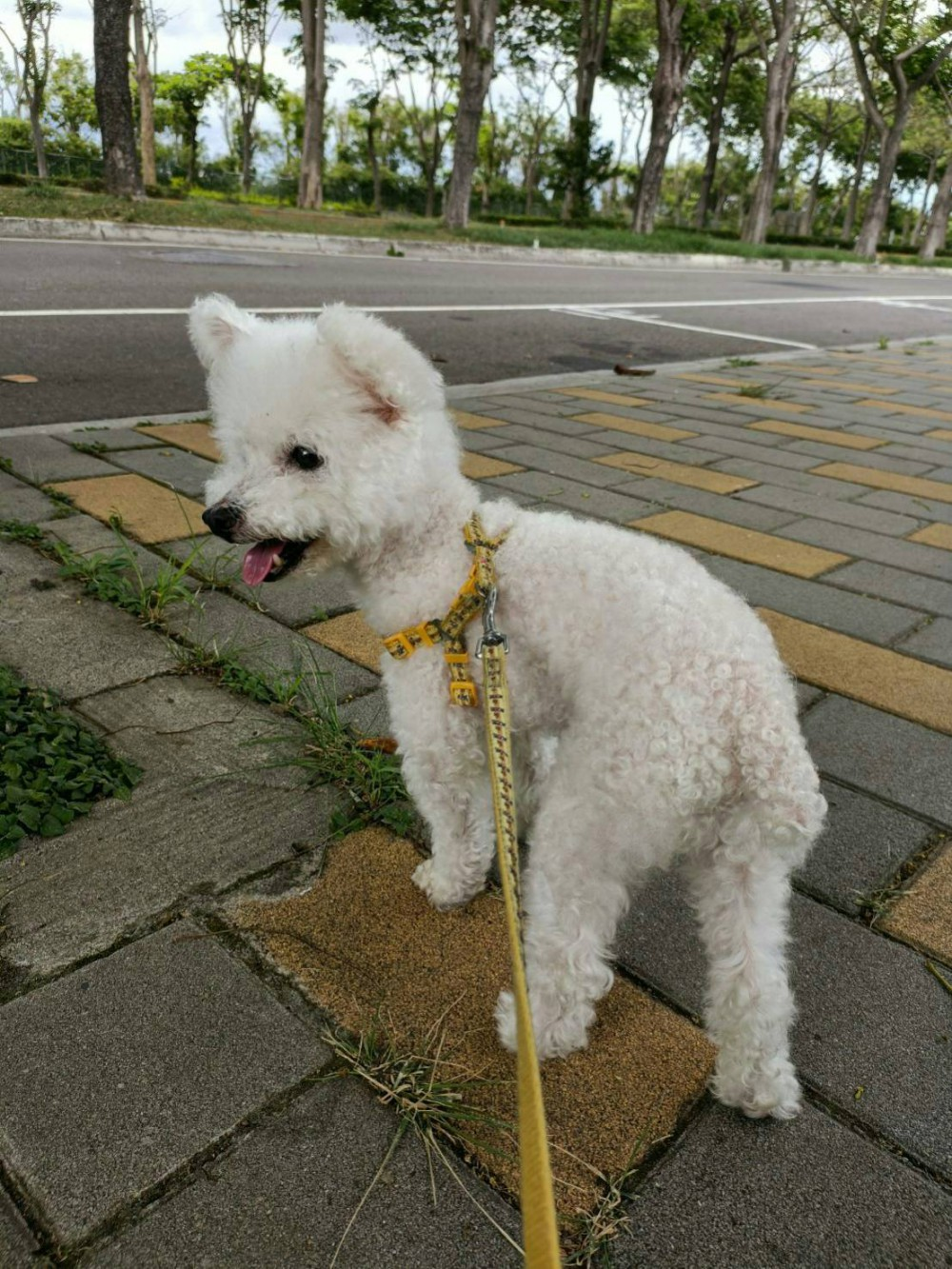 領養狗-KUMA