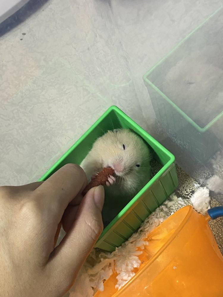 領養鼠-QQ