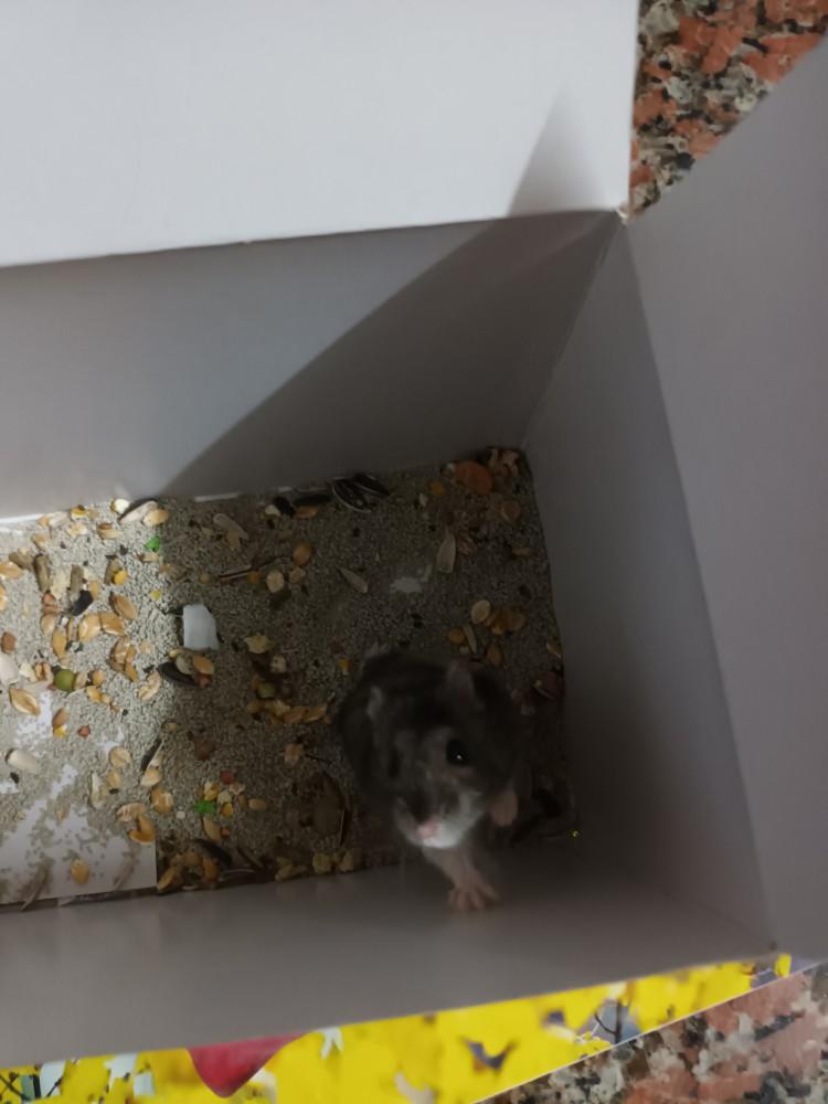 領養鼠-汎汎