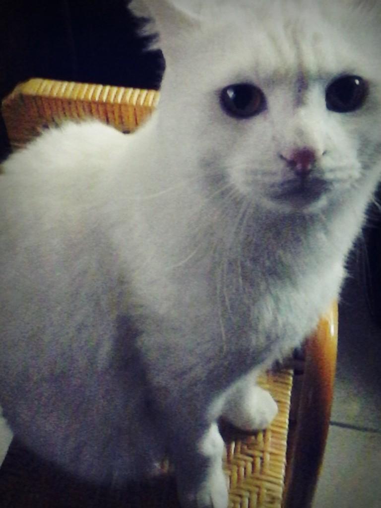 Oliver的照片